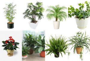 ฟอกอากาศผ่านพืชและต้นไม้